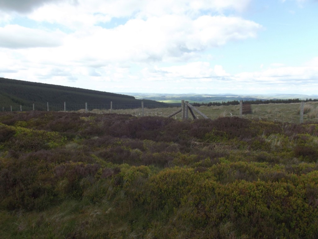 Up the top of the mountains is this huge plateau of heathland about 600 m above sea level.