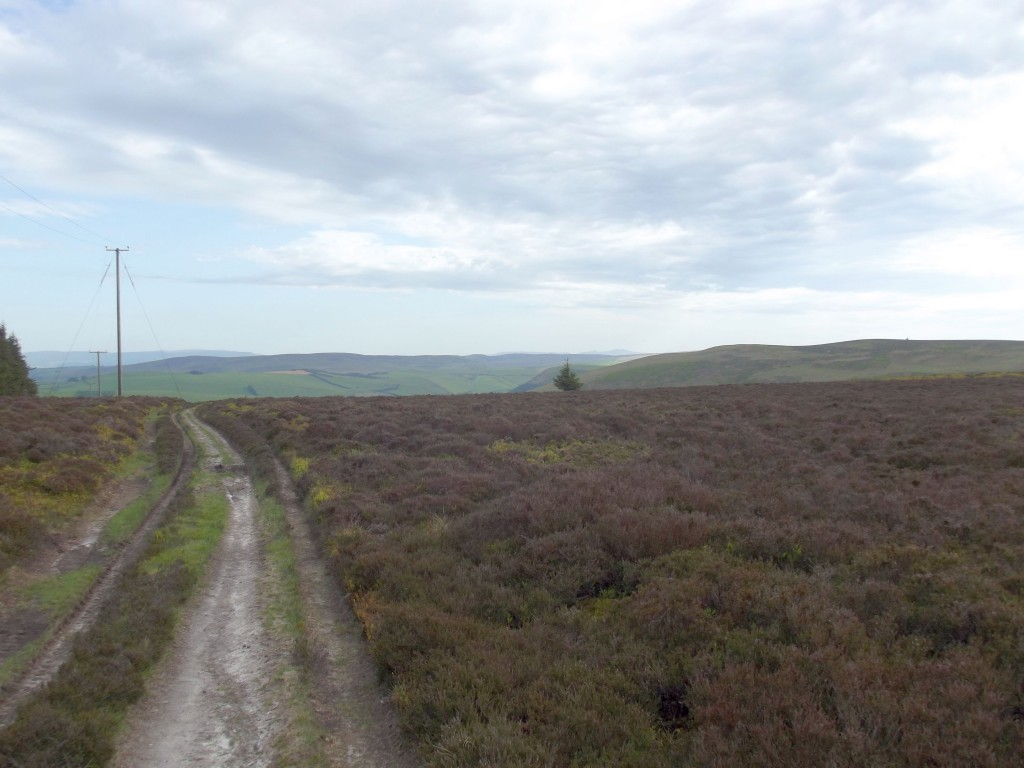 The top of the mountain near the Whimble. The whole of the Radnor hills at this altitude are very flat and barren, with just heathland for miles on end.